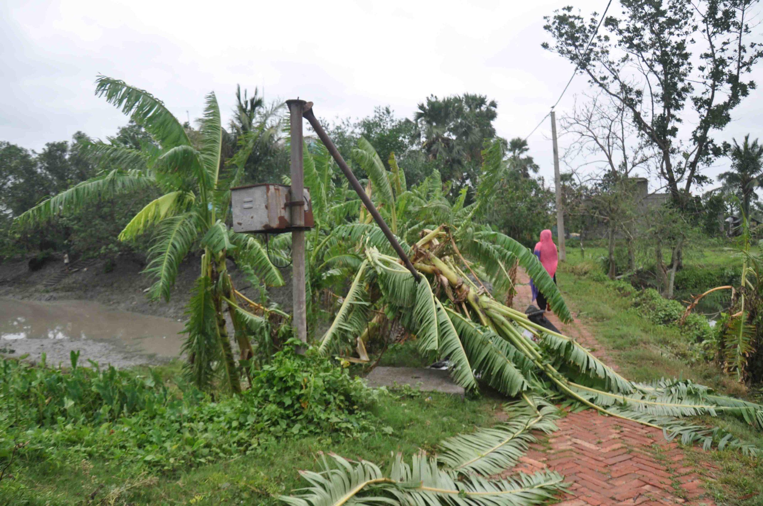 Elmaster og trær falldet i stortal