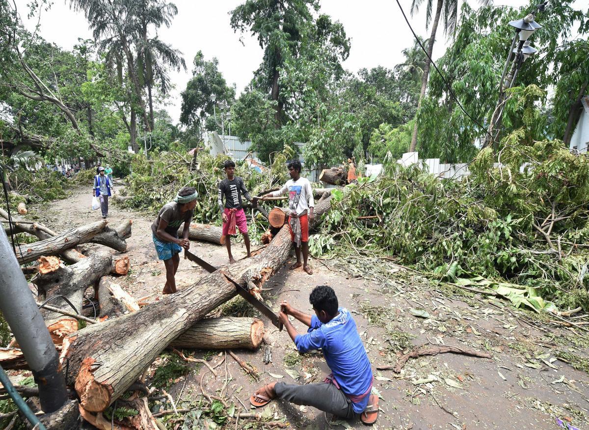 Lokal folk er ved at skære fallede træerne op