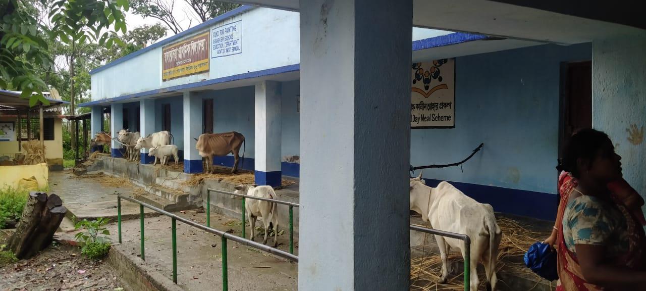 Man parkerede husdyr i en skolebygningen